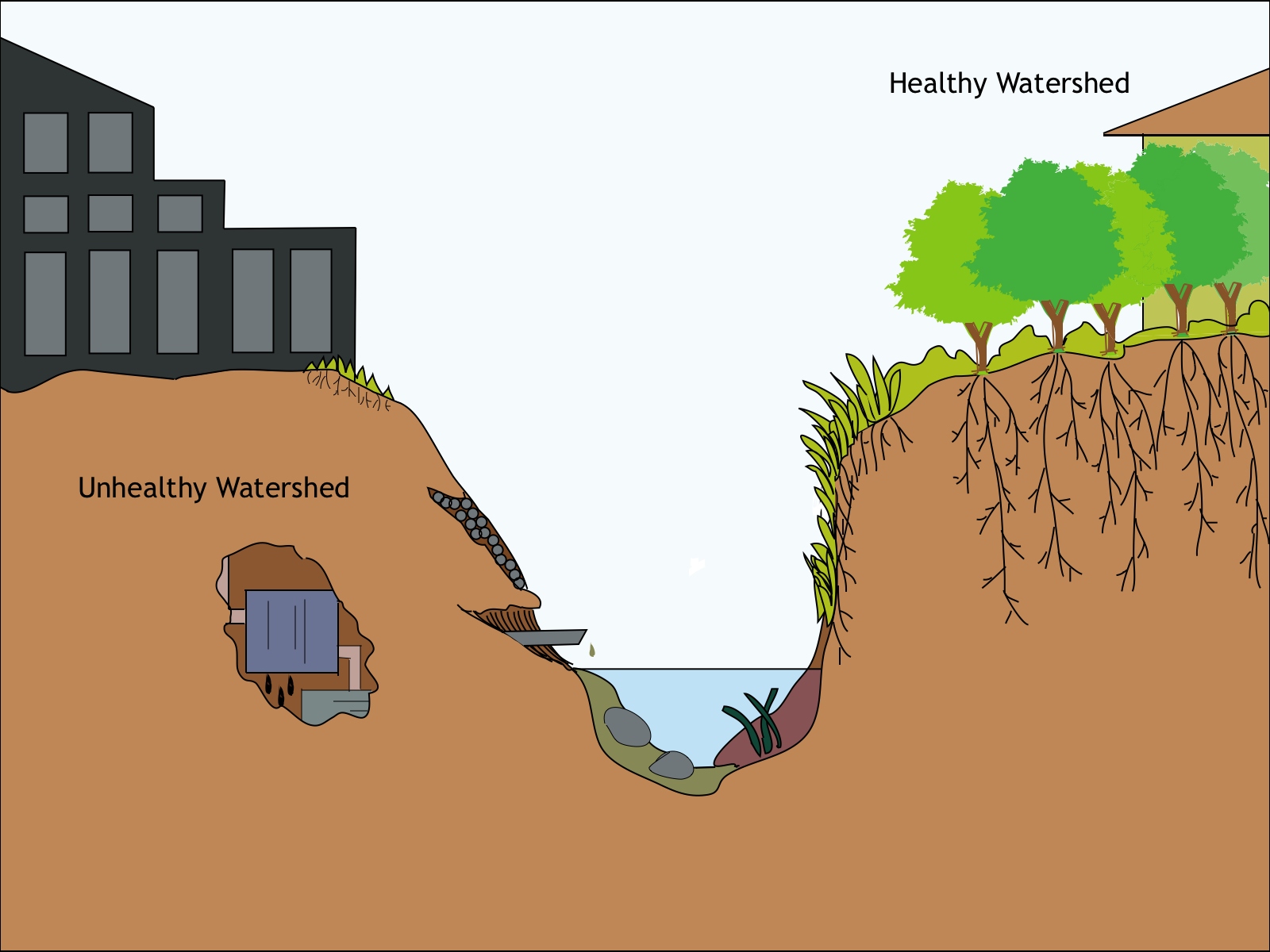Healthy vs. Unhealthy Watersheds