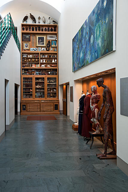 Mark Dion's Cabinet of Curiosity on display in the Frances Lehman Loeb Art Center