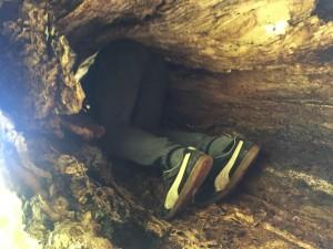 Andrew climbing into a tree
