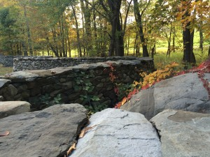 Virginia creeper creeping across Andy Goldsworthy's Five Men, Seventeen Days, Fifteen Boulders, One Wall.
