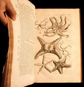 Georgius Everhardus Rumphius, D'Amboinsche Rariteitkamer, 1705