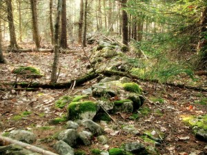 Similar stone wall we stumbled upon in the Catskills. With tress fallen upon it, moss and some deterioration.