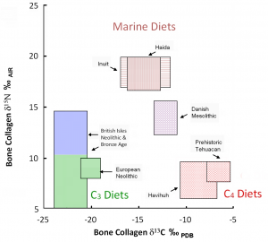 Examples of various human diets