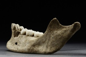 Jane's mandible, with notches indicating the removal of her flesh.