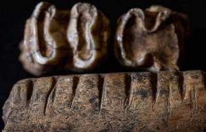 Maya bone