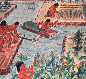 Chinampa farming