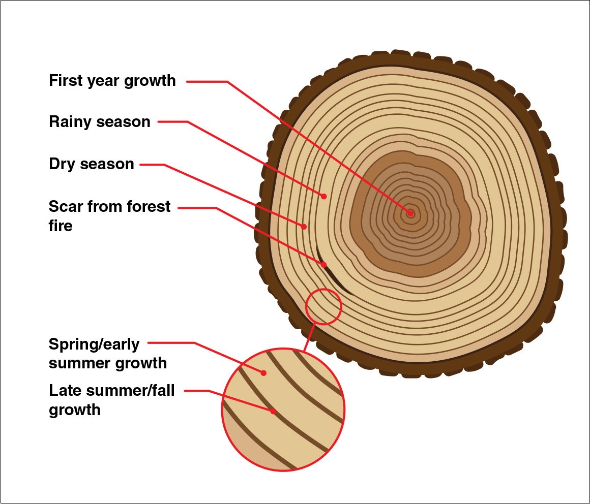 What Trees Can Tell Us About The Past The Importance Of