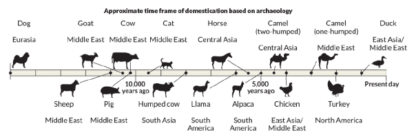 The Domestication of Species and the Effect on Human Life