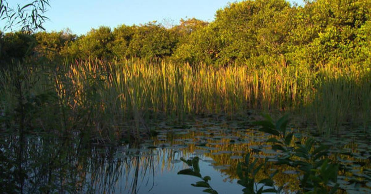 Ecosystem Vegetation Of The Everglades National Park ...  |Everglades National Park Ecosystem