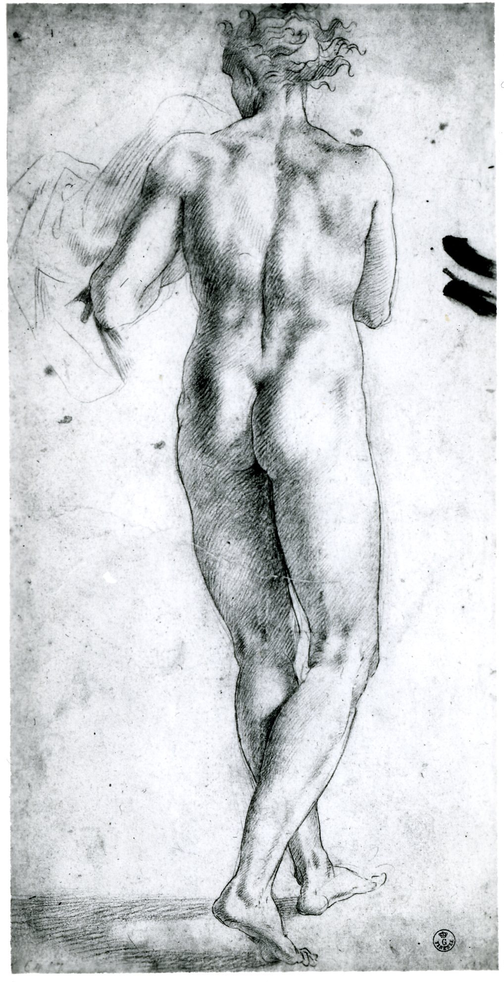 D.21 Standing Nude Youth