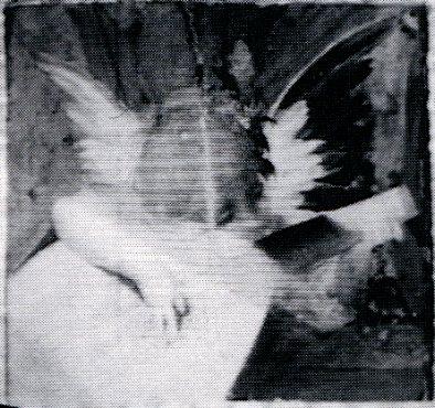 Fig. Reflectograph96