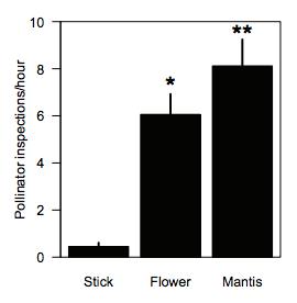 Visitation rates of wild pollinators to field stimuli.