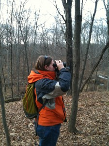 Watching Black-capped chickadees at the Vassar Ecological Preserve