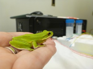 frog_in_hand2