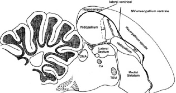 Archilochus colubris - Wikiwand