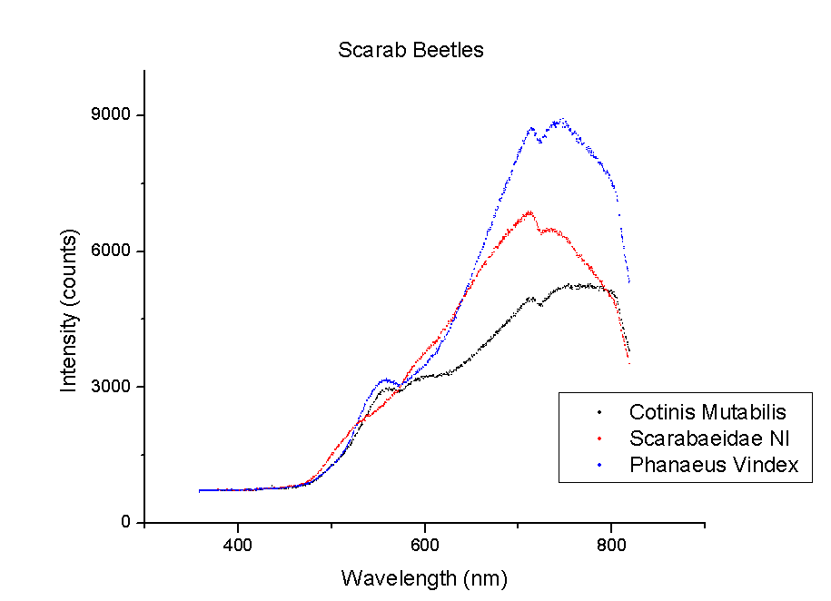 Scarab beetle spectra