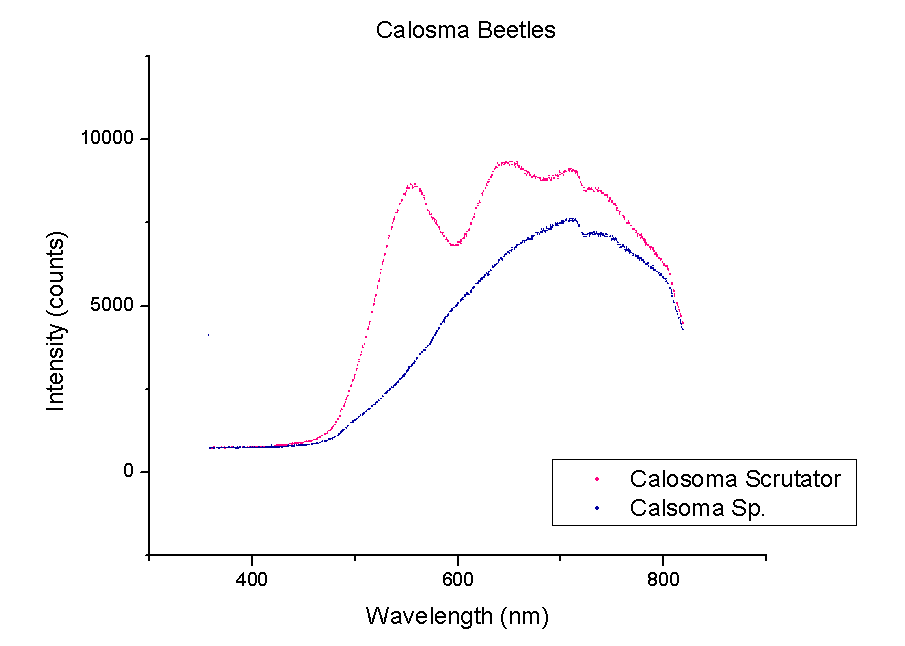 "A comparison of Calosoma or ""ground"" beetles."
